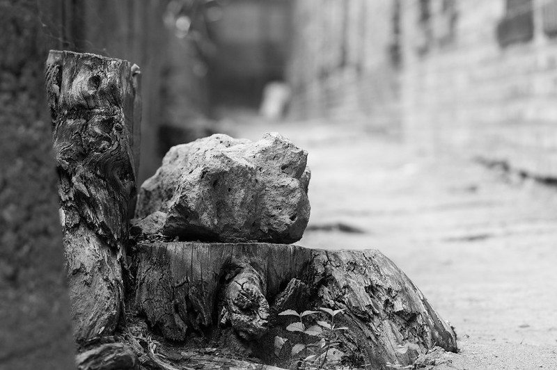 Image of stump with alley in background